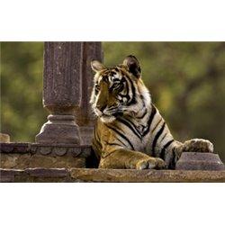 Taj y Tigres en Semana Santa, salida 4 Abril