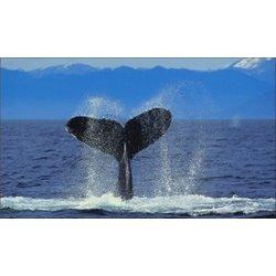 Canada y ballenas