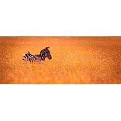 Gran Safari por Tanzania